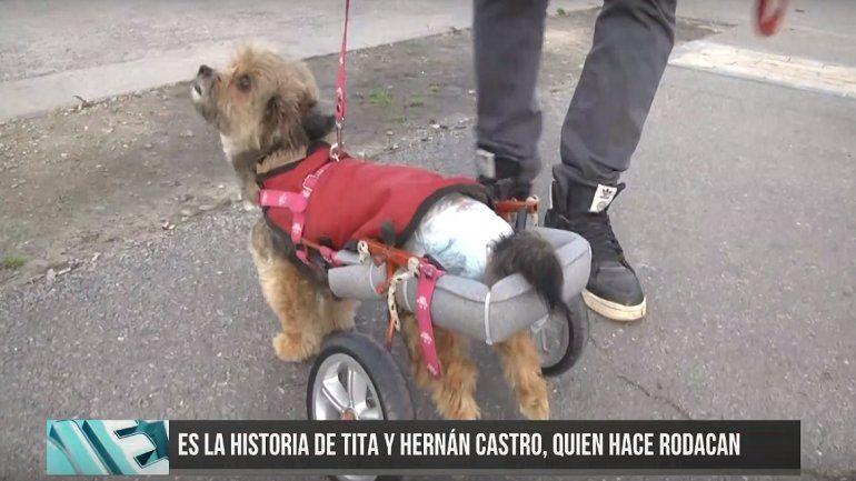 La conmovedora historia del marplatense que fabrica for Carritos para perros