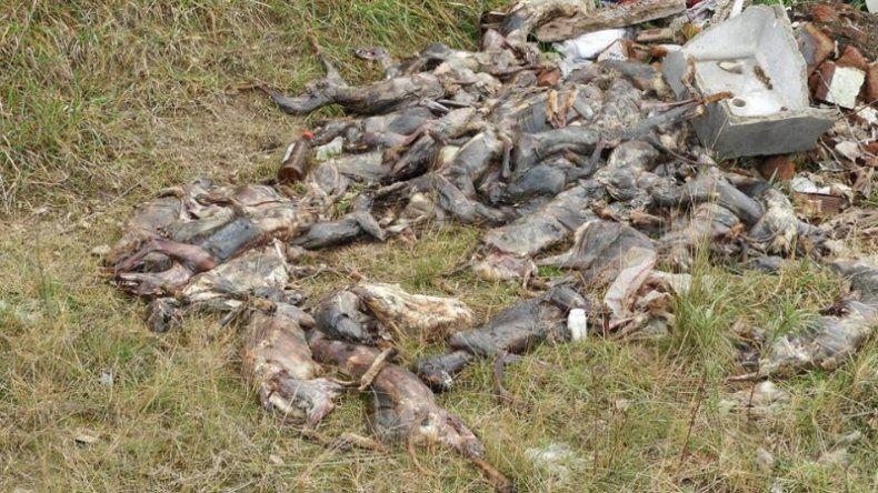 Horror en Lobería: aparecieron decenas de animales muertos y despellejados
