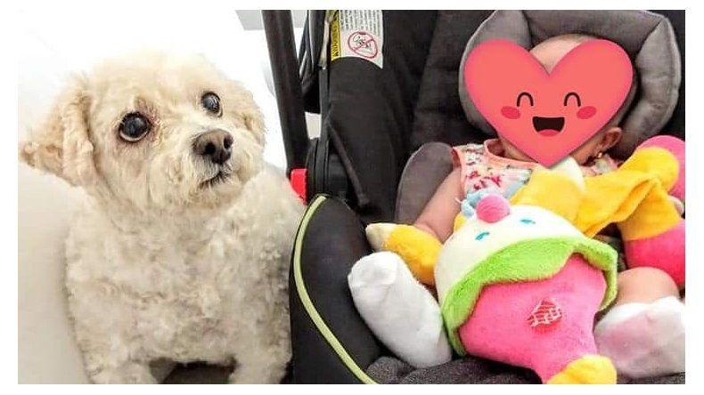Desesperado pedido de una familia a la que le robaron el perro en Rawson y Jujuy