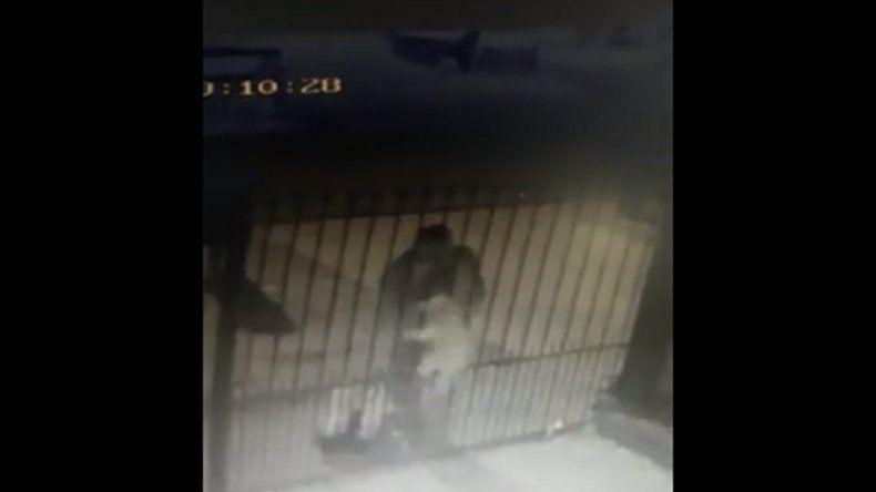Video: le robaron el perro caniche por entre las rejas de su casa