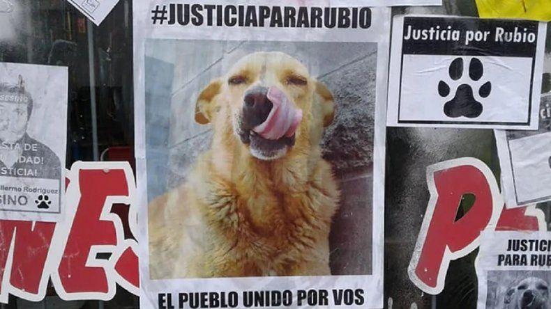 """Llegó al Congreso el pedido de justicia  por """"Rubio"""", el perro asesinado en la ruta"""