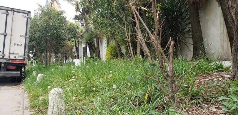 Pasto crecido, veredas rotas y falta de iluminación, entre las principales quejas de los vecinos.