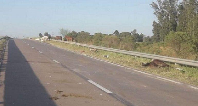 Un camión atropelló y mató a 6 caballos