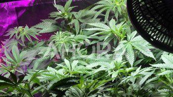 Video: así es la venta de cannabis en el Uruguay