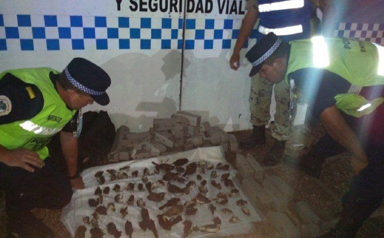 Indignante: llevaba 145 aves en cajas de cartón y 85 estaban muertas