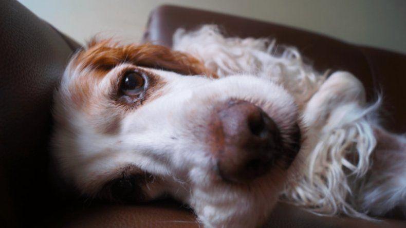 Cómo proteger a tu mascota de un golpe de calor