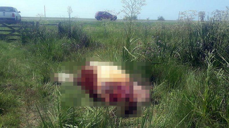 """Productor sufrió carneadas en su campo: """"Se nos matan de risa en la cara"""""""