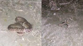 Los bomberos rescataron dos serpientes y las liberaron en una zona rural