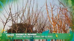 Verde Litoral: ¿qué árboles nos conviene plantar en nuestras casas?
