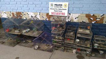 Secuestran una importante cantidad de aves en cautiverio