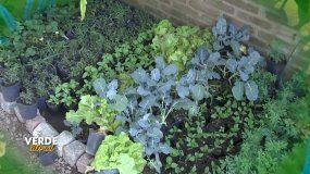 Verde Litoral: conocemos los múltiples usos de las plantas aromáticas