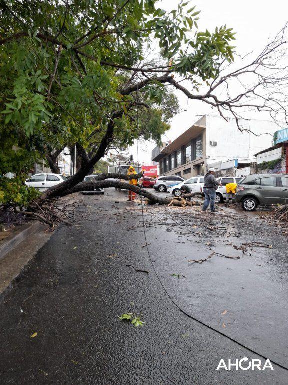 Por la tormenta, cayó un árbol de grandes dimensiones y bloqueó calle Alsina