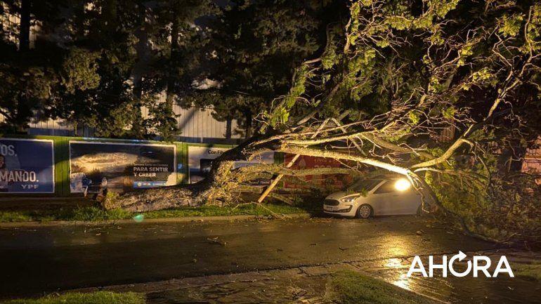 Por los fuertes vientos, más de 20 árboles cayeron en Paraná