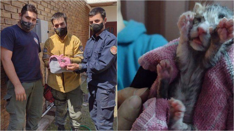 Bomberos rescataron un gatito bebé que había caído en un desagüe